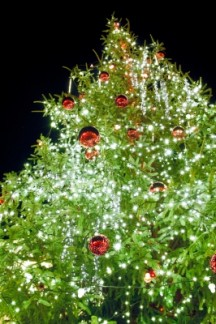 O Tannenbaum! Christmas tree facts by the numbers