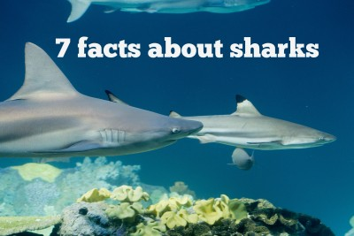 7 fascinating facts about sharks for Shark Week and beyond