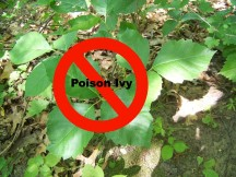 Poison ivy: Facts and home remedies to relieve the insidious itching