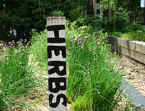 Herb Plant Markers.png