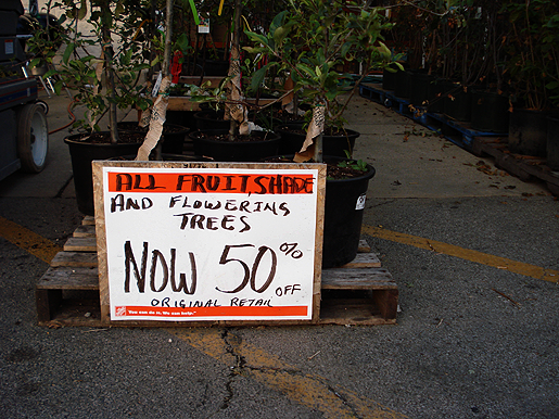 Trees At Home Depot Half Off Chicago Garden