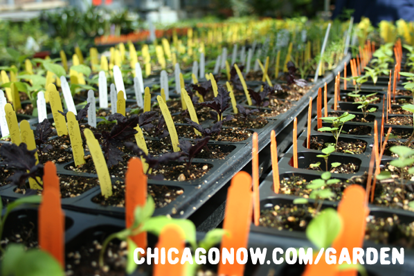 Chicago Gardening Events for May 2011