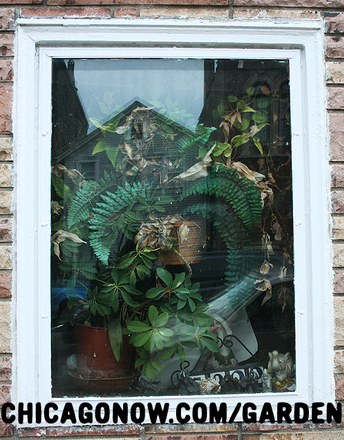 Houseplants in a Chicago Window