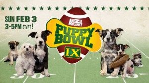 Forget the Super Bowl, I'm watching the Puppy Bowl