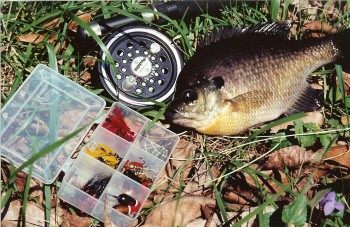 A primer for Southern Illinois fly fishing