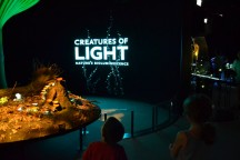 Creatures of Light: Nature's Bioluminescence at the Field Museum