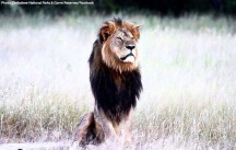 Is the murder of Cecil the Lion more horrendous than when any other animal is killed for sport?