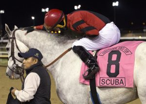 Jockey Alonso Quinonez gives Scuba a pat after winning the 2017 Hawthorne Gold Cup.