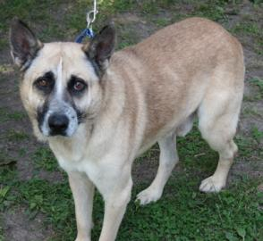 Chappie was a senior dog that waited a long time to find a home.