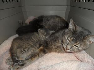 Spay and Stay takes in friendly strays - like China and her kittens - and finds them homes.