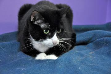 Black Cats and seniors like Miss Understood - an 11 year old cat - have a hard time finding homes.