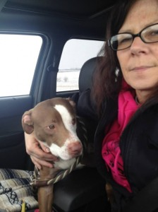 Belina needs a foster through It's a Pittie Rescue.
