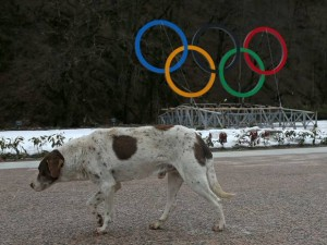 Exterminators were hired to rid Sochi of stray dogs that had been displaced by the Olympics.