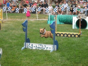 The Rock N Roll K9 Performance team will be on hand throughout the show to entertain.