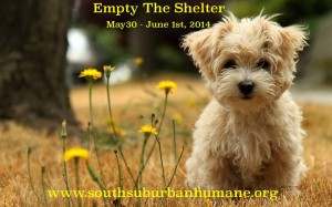 Empty the Shelter
