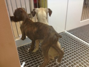 The picture of these emaciated dogs was taken last summer at Naperville's Petland. I've been told to get a real job and stop picking on companies.