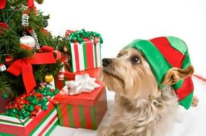 Chicago-area holiday weekend pet events