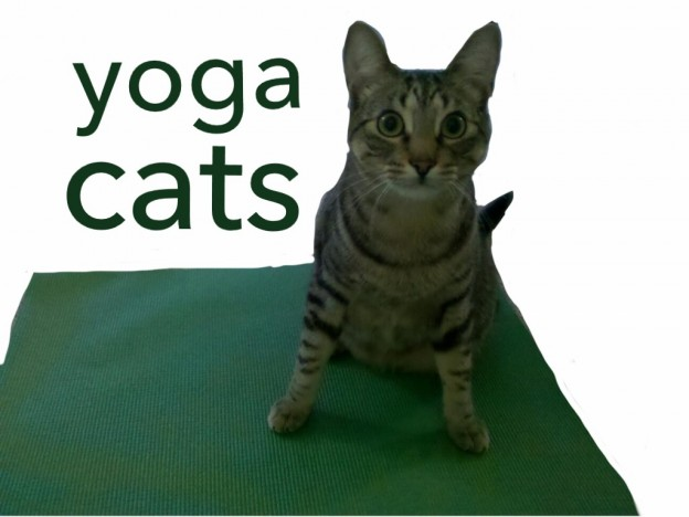 Cat Yoga - a Caturday story