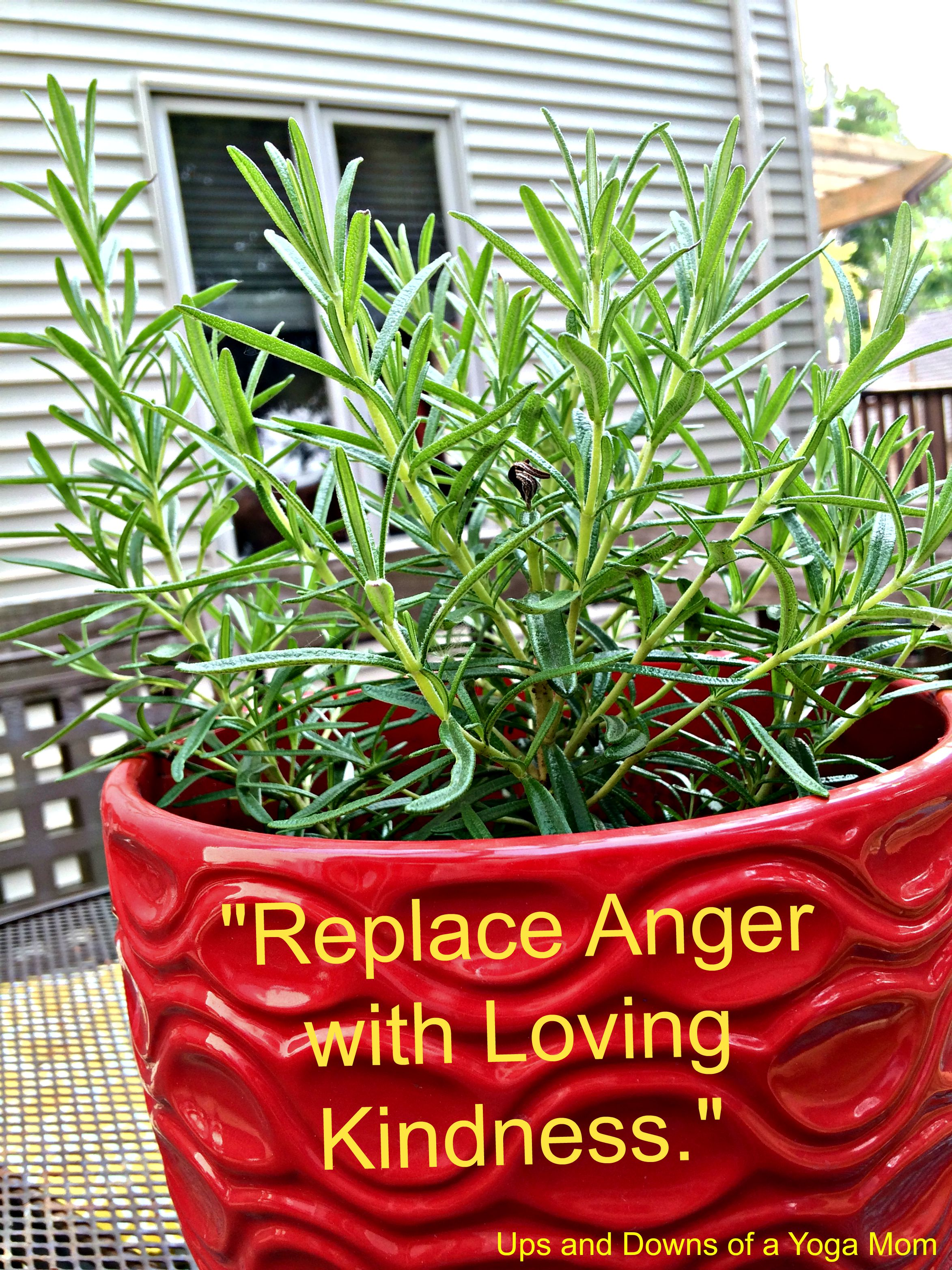 Replace Anger with Loving Kindness