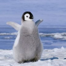 Waddle with me. What I'm learning from a Penguin.